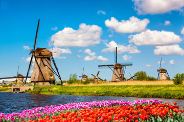 Fototapeta Colorful spring landscape in Netherlands, Europe. Famous windmills in Kinderdijk village with a tulips flowers flowerbed in Holland. Famous tourist attraction in Holland