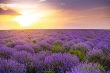 Foto op Canvas Zonsondergang Beautiful Lavender field, sunset and lines. Moldova, 2019
