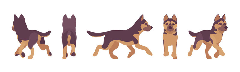 Shepherd dog running. Working breed, family pet, companion for disability assistance, search, rescue, police, military help. Vector flat style cartoon illustration, white background, different views