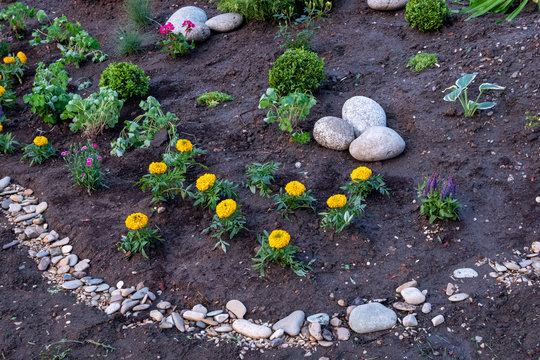 Flowerbed with yellow marigolds decorated with decorative stones.