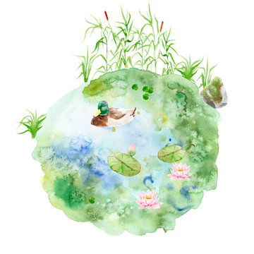 watercolor painting Pond - composition with reeds, snag, stone pond, duck, lily