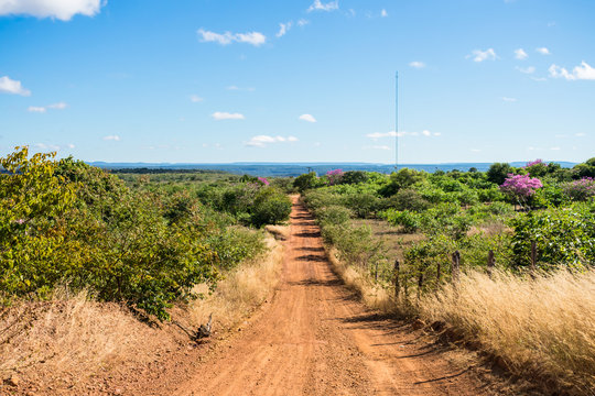 Countryside road in Oeiras, Piaui state, Brazil - Sertao landscape