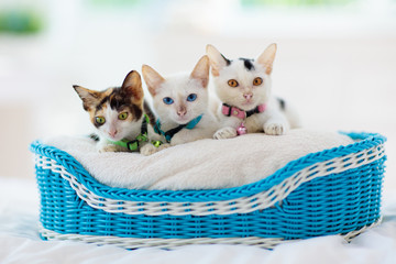 Kittens in basket. Baby cats at home. Little cat. Wall mural