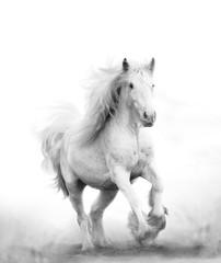Türaufkleber Pferde Beautiful snow white horse running