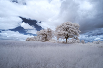 infrared landscape with trees and blue sky