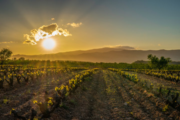 Panoramic view of a vineyard in Spain during a spring day with backlight and blue sky - Image