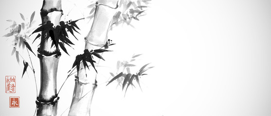 Bamboo trees on white background. Traditional Japanese ink wash painting sumi-e. Hieroglyphs - eternity. freedom, clarity, way.