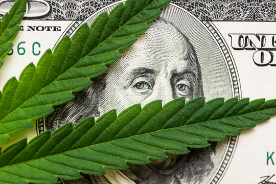 Money and marijuana. Concept of business, medicine and selling hemp, drugs. Hundred dollar bill of the USA Franklin
