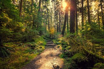 Photo sur Plexiglas Route dans la forêt Olympic National Forest, Olympic National Park
