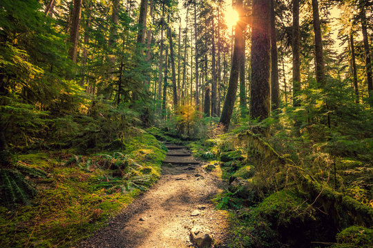 Olympic National Forest, Olympic National Park