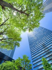 Fototapete - 新緑の新宿高層ビル街