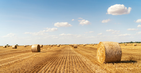 haystacks lie on a field harvesting Wall mural
