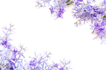 Frame made of purple flowers  on white  background. Flat lay, top view