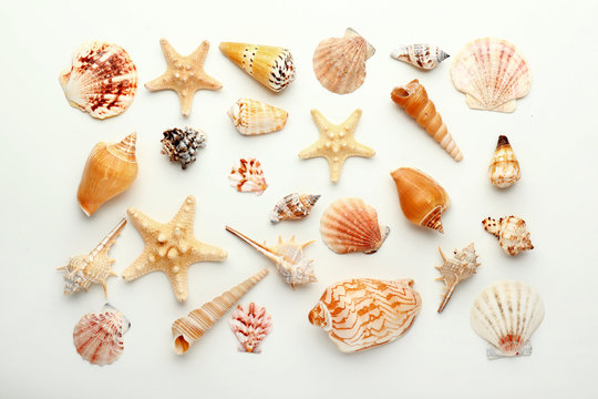 Many beautiful sea shells on white background, top view