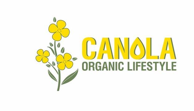 Yellow rape flowers, canola oil - health and beauty. Brassica napus. Vetor Illustration.