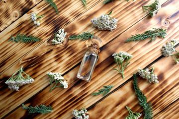 Yarrow flower oil aromatherapy to treat the body