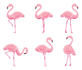 Canvas Prints Flamingo Cartoon pink flamingo vector set. Cute flamingos collection.