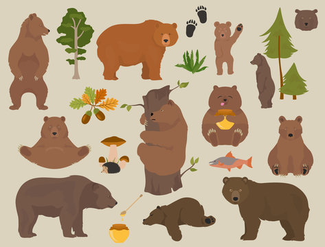 All bear species in one set. Bears in forest collection