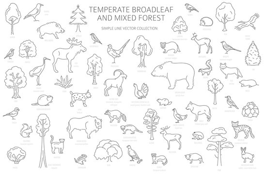Temperate broadleaf forest and mixed forest biome. Terrestrial ecosystem world map. Animals, birds and plants set. Simple outline graphic design