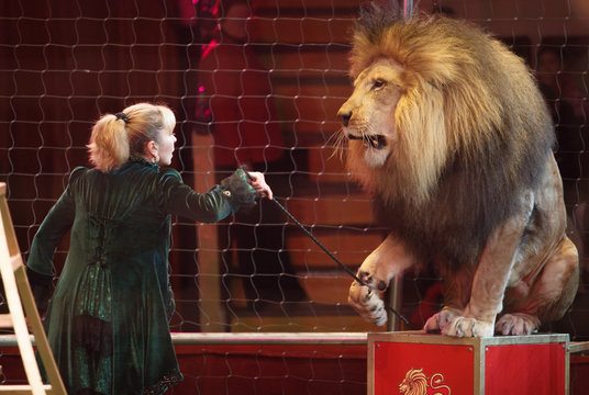 performance of a trainer of lions in a circus.
