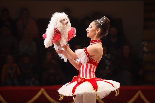 performance of a dog trainer in a circus.