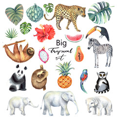 Set with leopard, zebra,elephant, panda,lemur,  sloth, parrot, toucan and tropical leaves, papaya, watermelon pineapple, hibiskus. Isolated elements. Hand painted in watercolor.