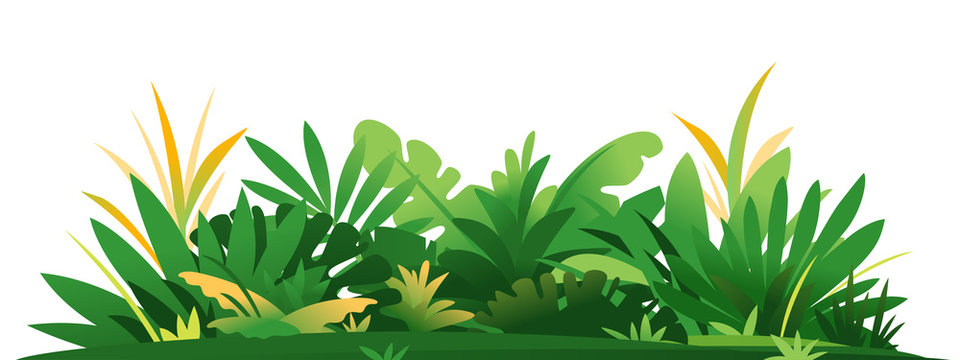 Decorative composition of jungle plants on ground, group of green plants on the sunny lawn isolated, dense vegetation of the jungle