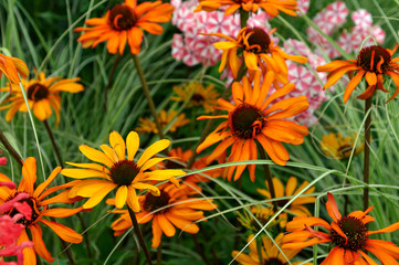 Detail of flower border with colourful Echinacea 'Tiki Torch' Wall mural