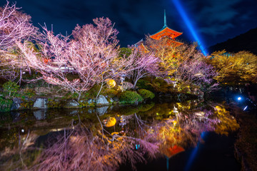 Wall Mural - Red pagoda and Illumination at night in temple, Kyoto in Japan.