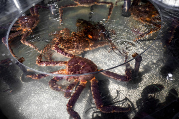 Fresh seafood in the restaurant aquarium, big kamchatka crab, scallops, oysters. Concept healthy food, lifestyle, useful food, delicacy, diet meal in the menu of elite five star hotel, asian market