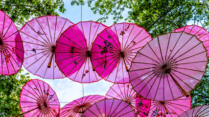 Pink Chinese Umbrellas or Parasols under a tree canopy in the Yale Town suburb of Vancouver, British Columbia, Canada