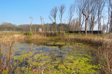Pond surrounded by trees, stork nest poles and a wildlife observation cabin on the far side of the lake, Het Zwin nature reserve, Knokke, Belgium, Europe