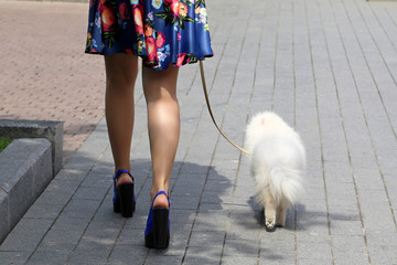 Girl in a summer dress walking with a little white dog in a city. Sexy female legs on high heels on a street, glamorous woman