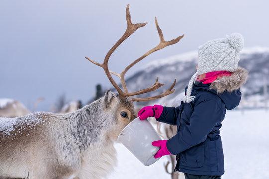 Little girl feeding reindeer in winter