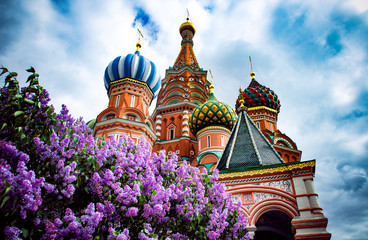 Spring in Moscow Red Square. A vibrant purple lilac tree blossom and a famous Saint Basil's Cathedral with blue cloudy sky at the backround.