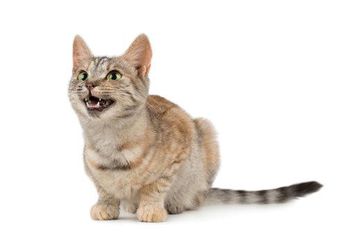 Pretty small smiling cat