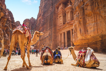 Foto op Canvas Kameel Petra Al Khazneh (The Treasury) with Camels in Jordan