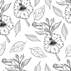 Hibiscus flowers seamless pattern with leaves on white background.