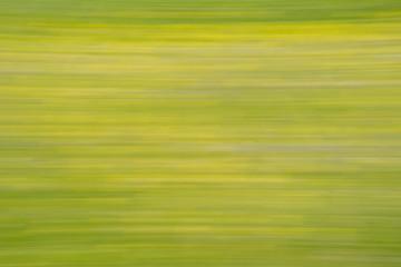 Gelbgrünes Element der Frische einer Wildblumenwiese