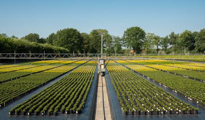 Bewässerung in einer Baumschule im Ammerland
