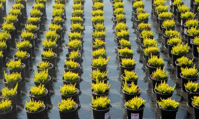 Pflanzenzucht in einer Baumschule im Ammerland