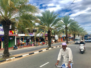 Date palm trees are seen in the middle of the road in Kattankudy