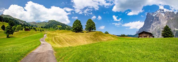 Swiss beauty, green meadows in Grindelwald valley, Bernese Oberland,Switzerland,Europe