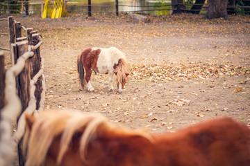 Pony horse- pony horse on a farm outdoors.