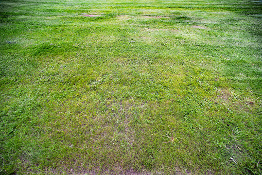 The background of a lawn with bald spots in perspective