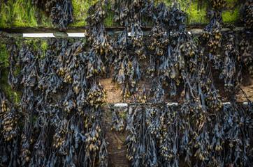 Seaweed On Wood.