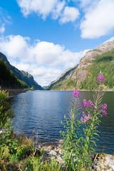 norwegian fjord in summer