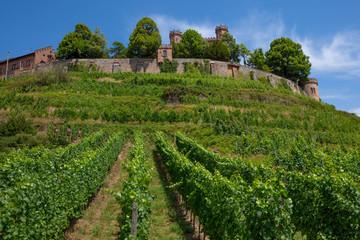 Weinstöcke mit den Burgmauern in Baden-Württemberg