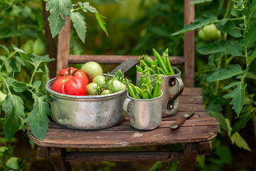 Healthy mix of vegetables in a small rustic greenhouse