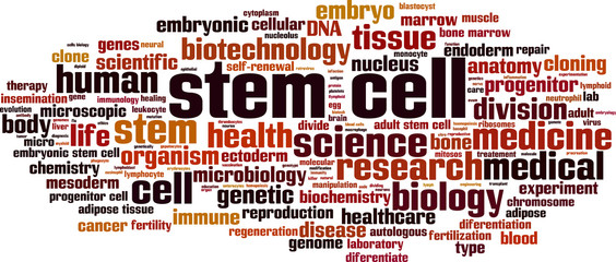 Stem cell word cloud